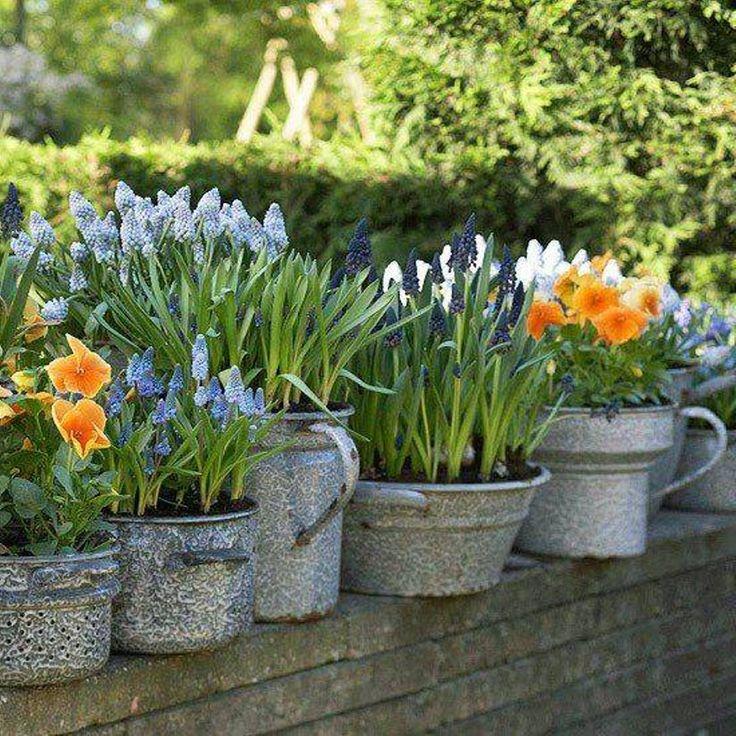 1000+ Ideas About Flower Garden Layouts On Pinterest