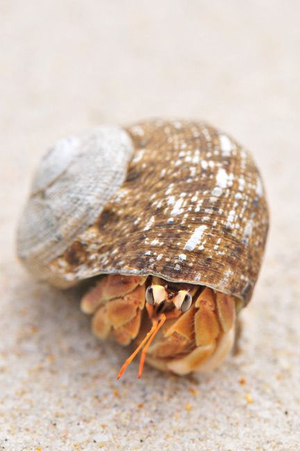 Pet a hermit crab