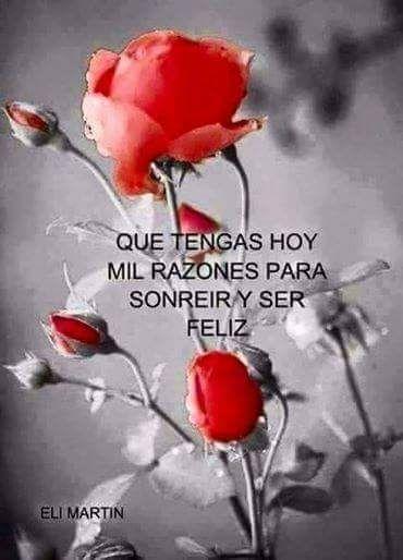 frases-alegres-rosa-roja-mil-razones-para-sonreir.jpg (370×514)