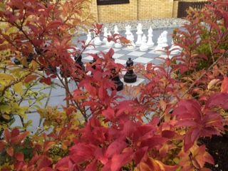 Our Atrium garden. Beautiful fall colors. And outdoor chess-game.