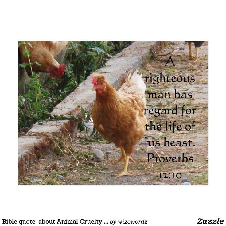 Bible quote  about Animal Cruelty Proverbs 12:10