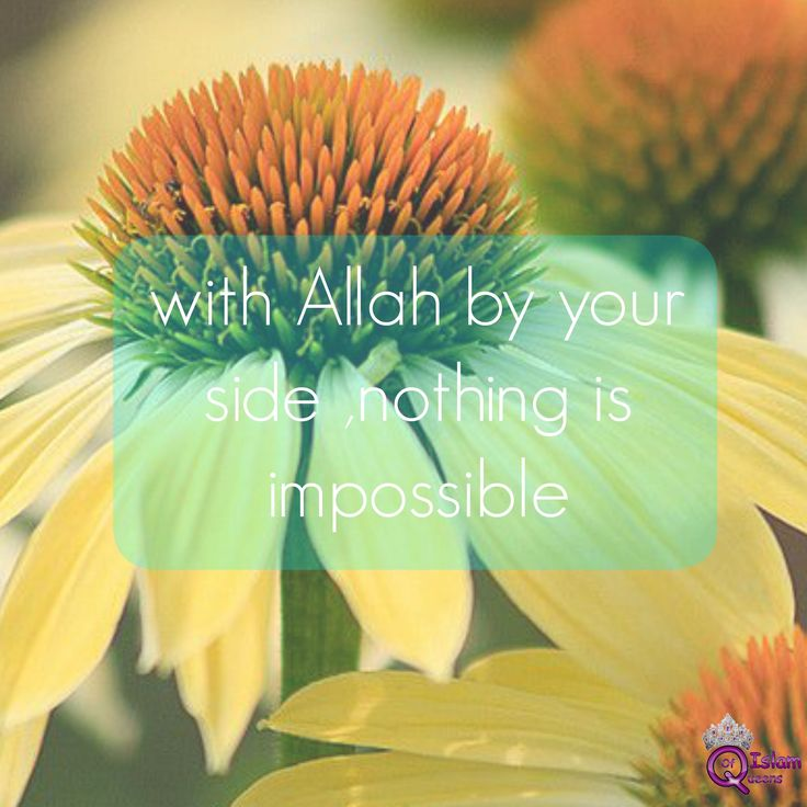 when Allah is by your side...
