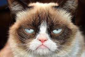 Угрюмый кот. Grumpy cat.