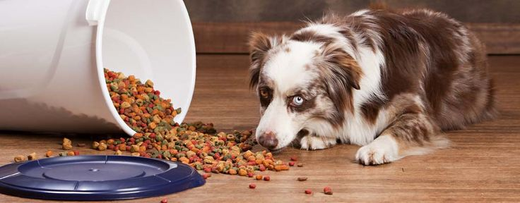Homemade Dogfood For Large Breed Dogs