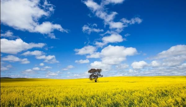Clare Valley, SouthAustralia.......More #incredibleplaces on : http://www.myincredibleplaces.com