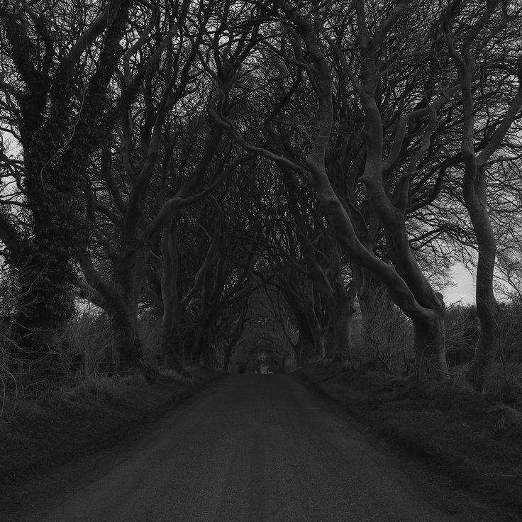 Dark Hedges, Ballymoney