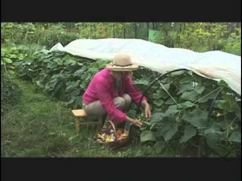 Советы по выращиванию Огурцов в парнике на огороде
