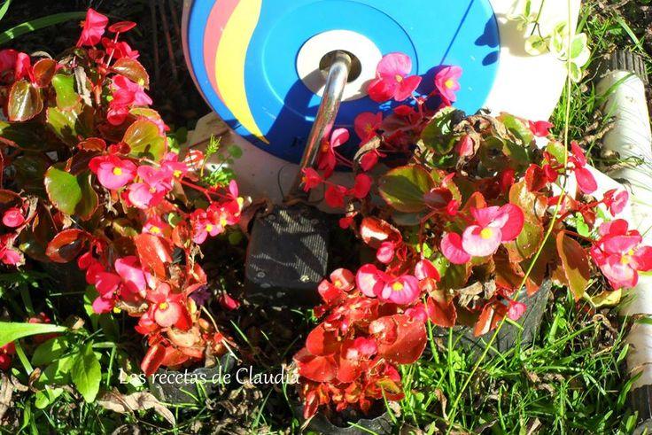 Flor de azúcar, rosadas y rojas.