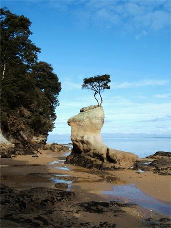 abel tasman national park, NZ