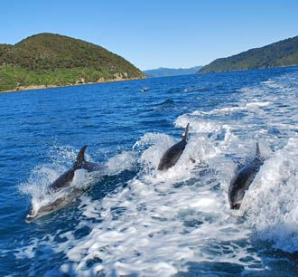 Marlborough Sounds boat tours - charter boat from Picton Waikawa Bay - Queen Charlotte Sound boat cruises