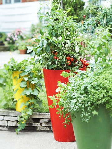 Decorative pots are ideal for growing tomatoes on a patio, balcony, or deck. If you use a large container, such as a half whiskey barrel almost any type of tomato will work. If you grow plants in a smaller, 10- or 12-inch-diameter pot, select a dwarf variety. 'Patio', 'Window Box Roma Hybrid', and 'Bush Early Girl Hybrid' all grow less than 2 feet tall, and are good choices for containers.: Garden Container, Can, Vegetables, Gardens, Vegetable Container, Container Gardening, Edible Flowers