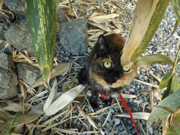 Deunan hanging out in the back yard.  www.darkothecanaanmutt.com