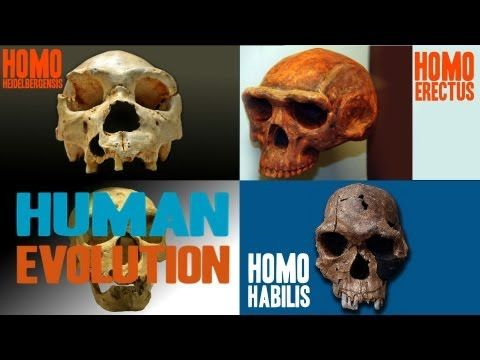 Facts about Human Evolution, fantastic 12 minute summary of what we know so far based on the fossil record and dna research.