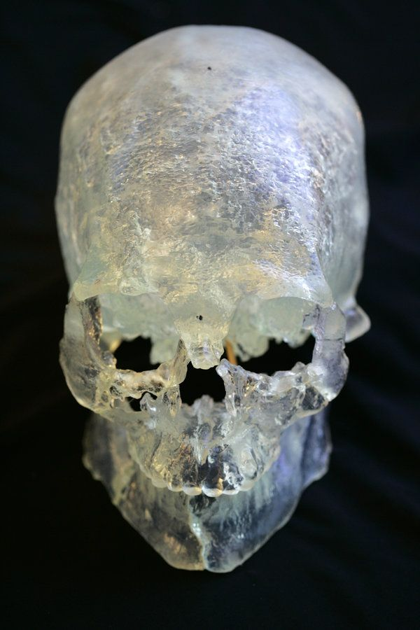 New DNA Results Show Kennewick Man Was Native American - NYTimes.com