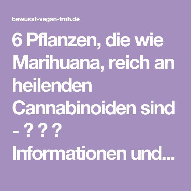 6 Pflanzen, die wie Marihuana, reich an heilenden Cannabinoiden sind - ☼ ✿ ☺ Informationen und Inspirationen für ein Bewusstes, Veganes und (F)rohes Leben ☺ ✿ ☼
