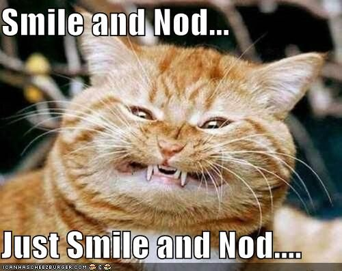 Kitties know how..Happ Face, Animal Pictures, Happy Face, Funny Cat, Happy Happy Happy, Crazy Cat, Funny Animal, Smile, Kitty