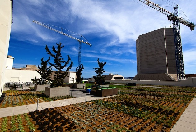 This is the roof garden of Twitter's new San Francisco Headquarters complete with vegetable patches...