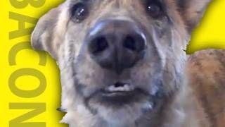 This #dog talks :)   repin, share, enjoy