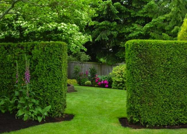 449 Best Images About Partitions Privacy Fences On