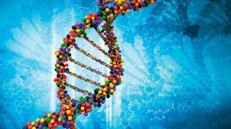 Biologists build a working calculator out of DNA -> http://www.techradar.com/1327033  DNA is pretty remarkable stuff. As well as forming the basis for basically all life as we know it it can also be used to make computers.  For several years now research teams around the globe have been building these DNA computers to solve simple tasks - calculating square roots or playing tic-tac-toe for example. In all these cases the circuits built are digital - special circuitry is used to convert the…