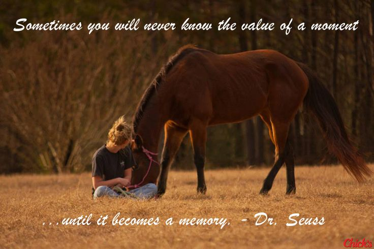 """Sometimes you will never know the value of a moment until it becomes a memory."" - Dr. Seuss #Horses #HorseQuotes"