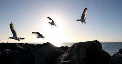 TWA-0051392 © WestPix Fremantle lighthouse fishermen on North Rous. Seagulls at…