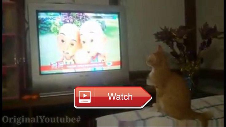😸 Kucing lucu penonton setiaFans Upin Ipin Funny Cat 😼 Kucing Cat Funny 😽 on Pet Lovers 😻