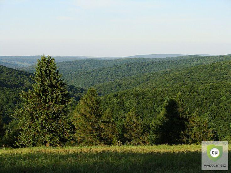 W granicach Parku znalazł się reprezentatywny fragment Beskidu Niskiego z najlepiej zachowaną szatą roślinną i fauną.