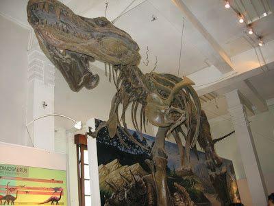 Museum Geologi di bandung merupakan salah satu objek wisata anak dan pendidikan