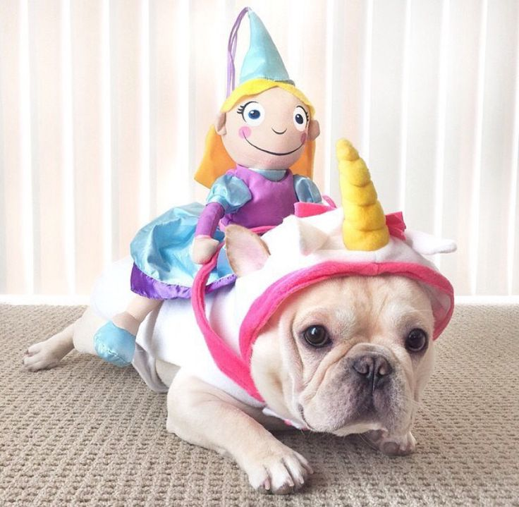 191 Best Images About Frenchie Costumes On Pinterest & Pug In Unicorn Costume - Meningrey