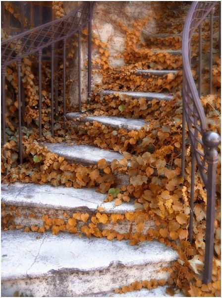 Oh how wonderful. I love the deliciousness fall brings, the feelings & the smells in the air evokes. Autumn Garden stairs.