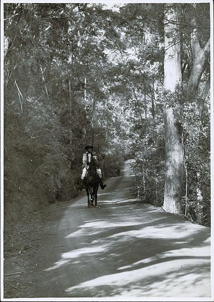 Ranger on horseback on Lady Carrington Drive, Royal National Park (NSW)