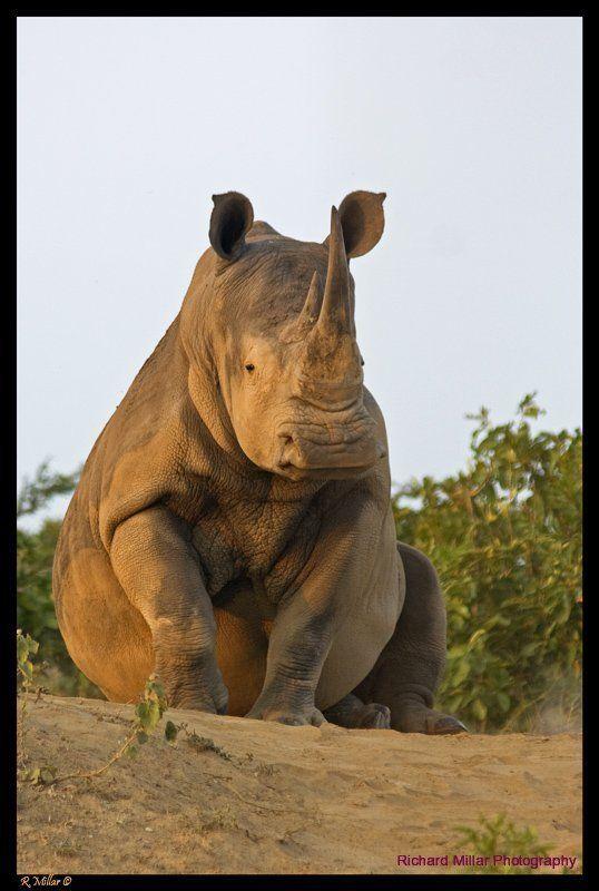 So rare, Richard Millar - African Wildlife Photography
