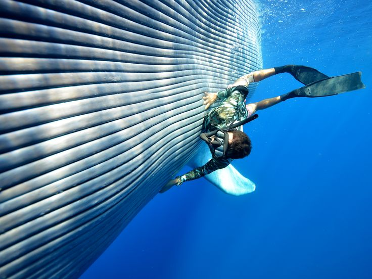 Man-on-Blue-Whale-Matthew-Coutts.jpg (1920×1440) | blue ...