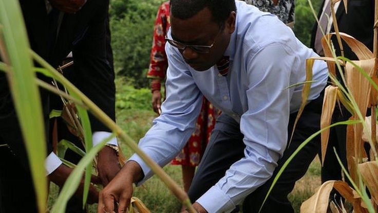 African Development Bank president Akinwumi Adesina wins the prestigious World Food Prize for his work to boost yields and farm incomes.