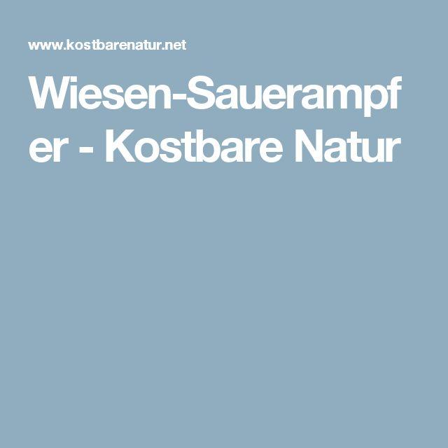 Wiesen-Sauerampfer - Kostbare Natur