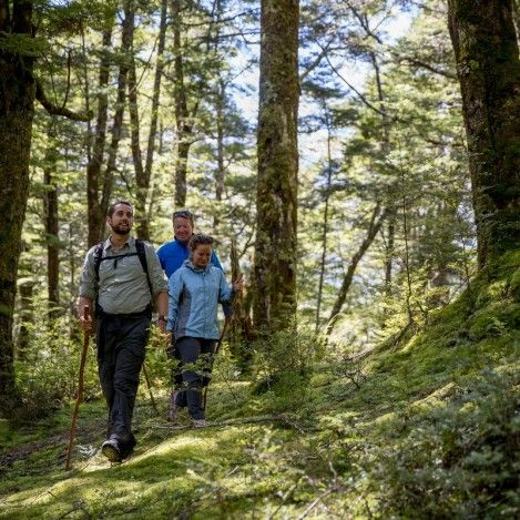 Walking through New Zealand's ancient beech forests is an absolute must do!