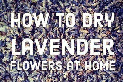 DIY lavender drying.