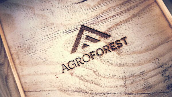 Agroforest/Identity on Behance