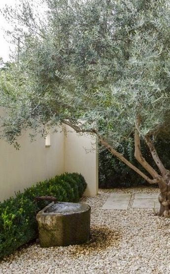 olive tree/gravel garden of author Eudora Welty in Jackson, Mississippi