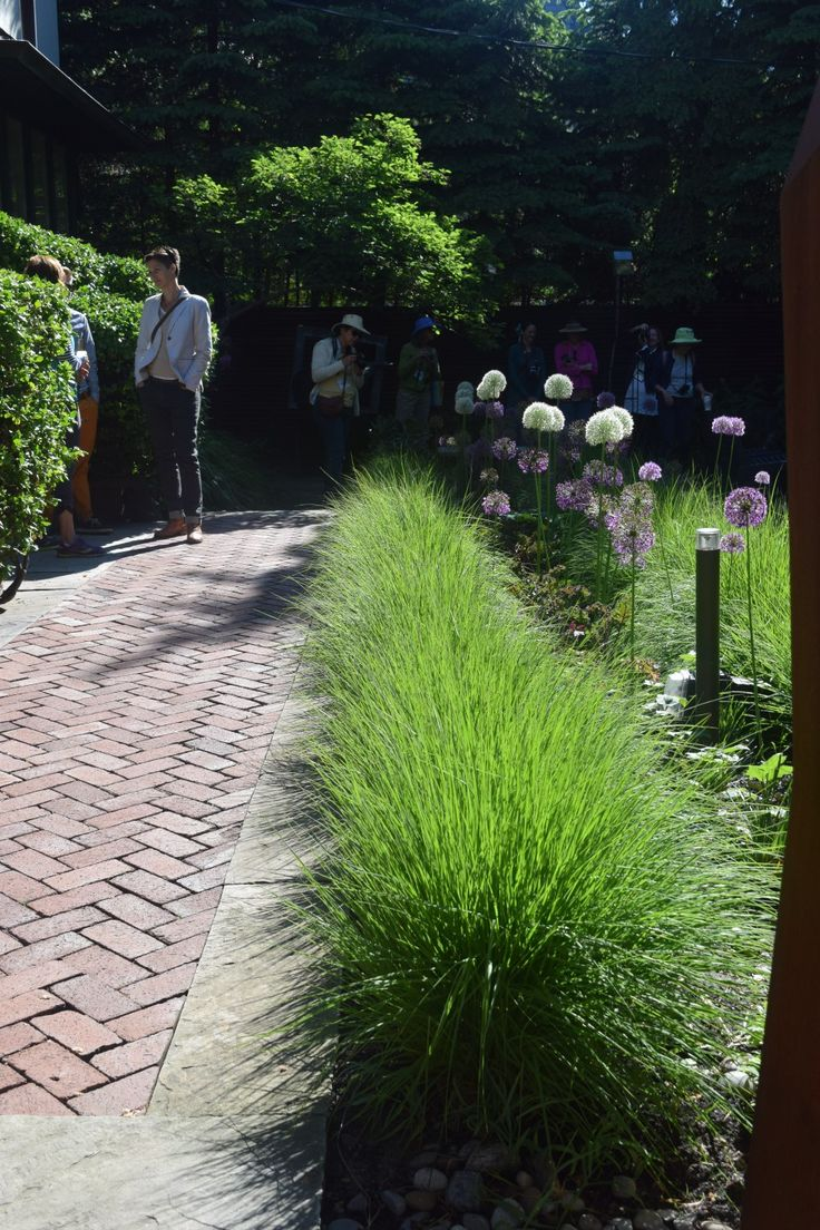Buy blue dune lyme grass in nw arkansas - A Secluded Shade Garden In Toronto