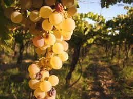Resultado de imagen para imagenes de viñedos en mendoza