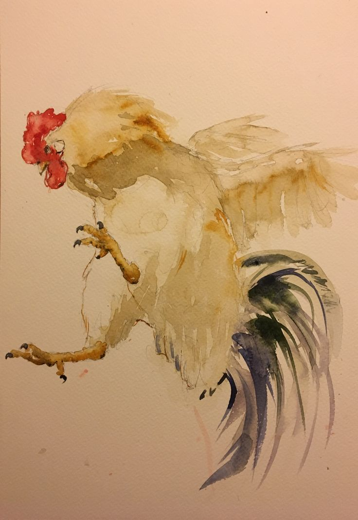 Rooster. Watercolor.
