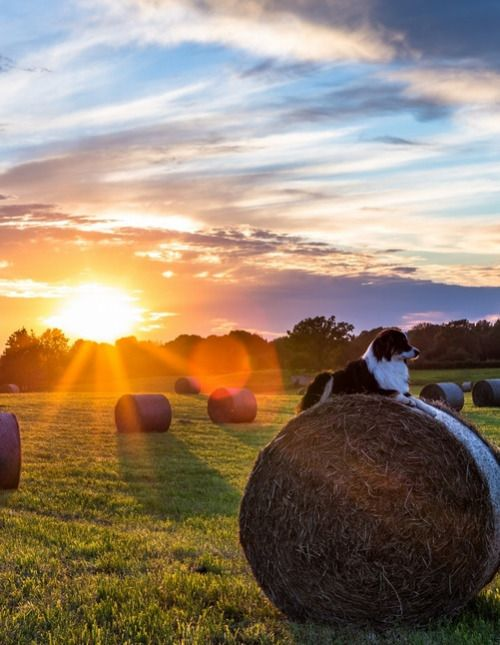 Country Living ~ fields of harvested hay
