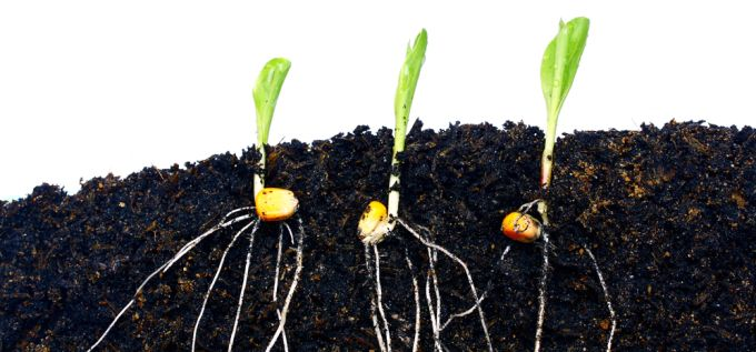 Plant Breeding vs. #GMOs: Conventional Methods Lead the Way in Responding to #ClimateChange