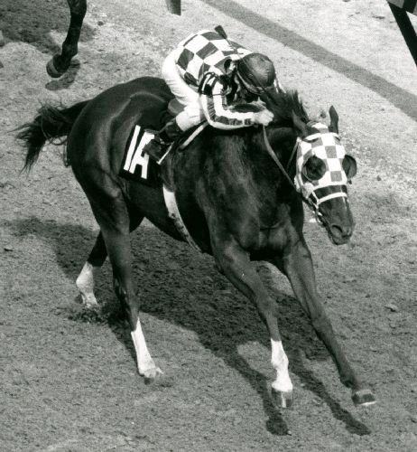 1635 best images about SUPERHORSE SECRETARIAT 1973 TRIPLE ...