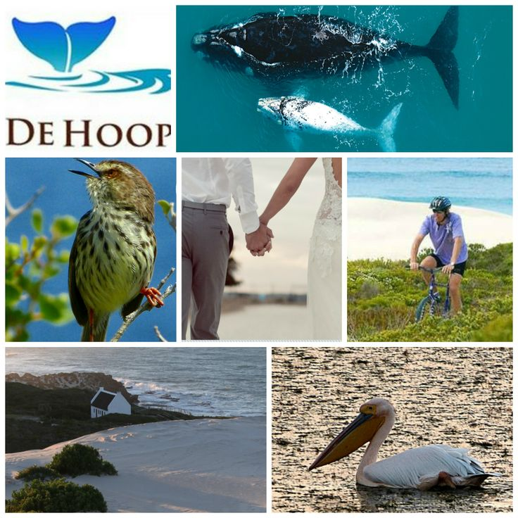 De Hoop Collection Nature Reserve  Email: info@dehoopcollection.co.za Reserve: 028 542 1253