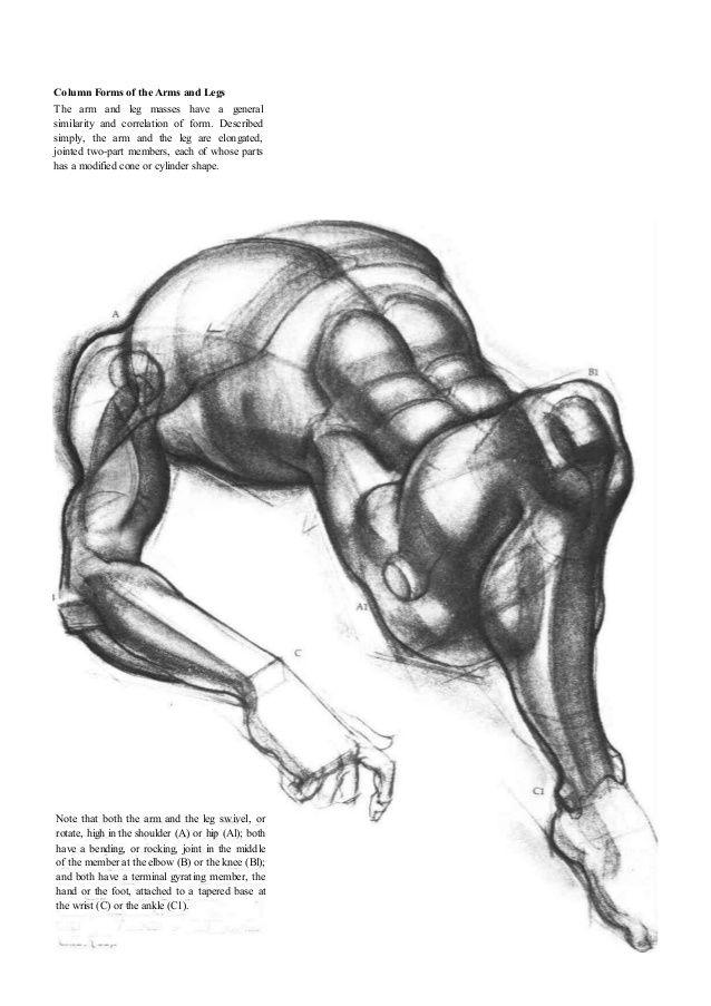 7 besten The Recommendations - Human Anatomy Bilder auf Pinterest ...
