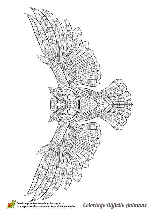 Les 25 meilleures id es de la cat gorie dessin chouette sur pinterest hibou dessin tekenen et - Chouette a dessiner ...