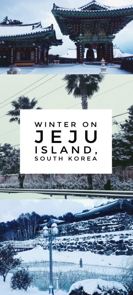 """The Jeju Island Winter That Shut Down the """"Hawaii of Korea"""": A Jeju Island winter in South Korea sees palm trees and Buddhist temples covered with snow, transforming the island paradise into a winter wonderland."""